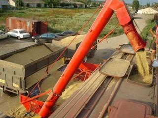 Погрузка вагонов - зерновозов (из машины в вагон).