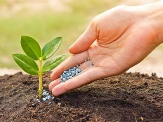 Удобрения пестициды сельское хозяйство