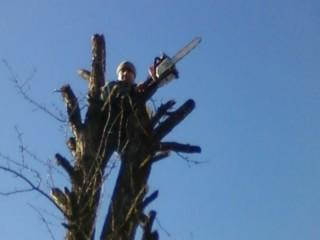 Зрізання, валка, обрiзка, видалення, спилювання вирубка дерев. Розчистка ділянок. Умань