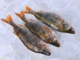 Свежая рыба оптом. Речная свежая рыба.