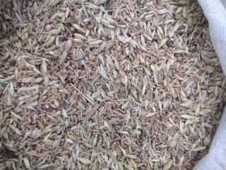 Закупка зерноотходы, некондиция