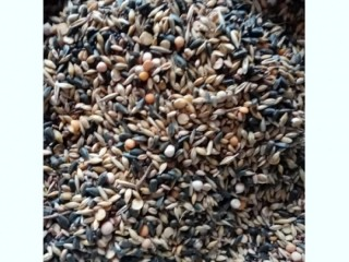 Закупівля зерновідходи, некондиция