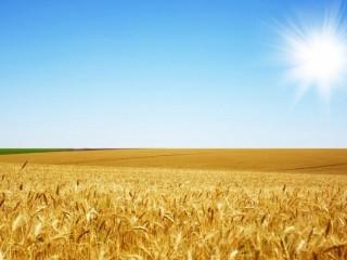 Послуги перевезення зернових. Перевезення зерна.