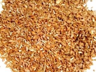 Закупаем все зерновые, некондицию, зерноотходы