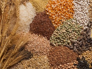 Закуповуємо всі зернові, некондицію, зерновідходи