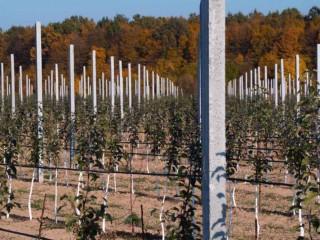Продам стовпчики для садів, виноградників, шпалер, огорож
