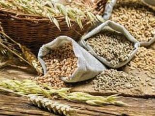 Куплю кукурудзу, пшеницю всіх класів, ячмінь, жито, овес. Зерновідходи.