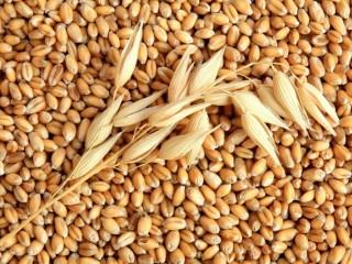 Зернові, зерносуміші, зерновідходи, некондиція. Будь-які варіанти