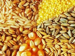 Куплю зерновые. Кукуруза, пшеница, ячмень, овес и тд