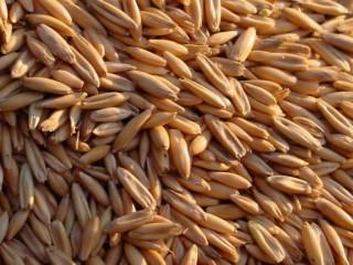 Кукуруза, соя, фуражная пшеница. Закупка.