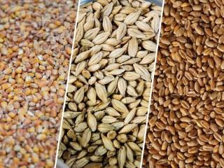 Зерновые. Зерноотходы. Кукуруза. Пшеница. Соя.