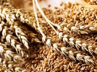 Куплю зернові, олійні