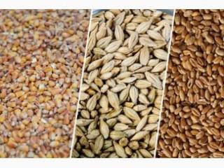 Зерновідходи зернові, олійні, бобові