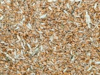 Куплю зерновідходи Зернові, олійні, бобові