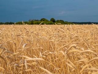 Закупівля зерновідходів! Працюємо з посередниками.
