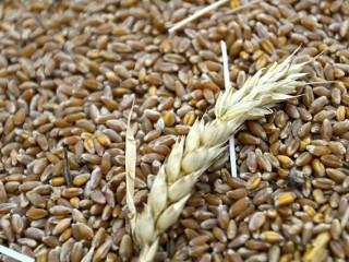 Постоянно закупаем зерноотходы масличные, зерновые, бобовые!