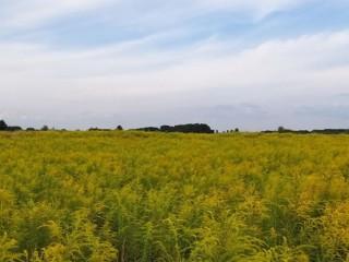 Продам земельный участок под жилую застройку в селе Гоголев, Киевской области, 12 соток
