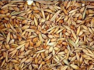 Куплю отходы зерновые, отходы масличные, отходы бобовые!