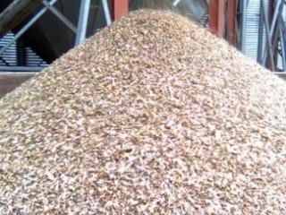 Куплю зерноотходы масличных, бобовых, зерновых культур