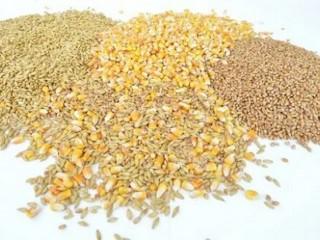 Куплю зерновідходи олійних, бобових, зернових культур